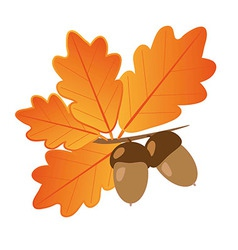 Acorns with oak leaves in autumn isolated objects vector