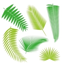 Tropical palm Leaves Collection isolate vector image vector image