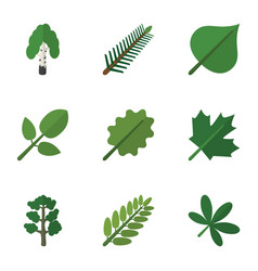 Flat icon nature set of maple leaves foliage and vector