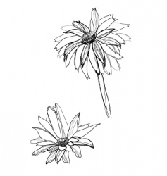 drawing gerbera vector image vector image