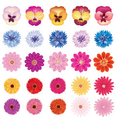 Floral bloom set different summer flower vector