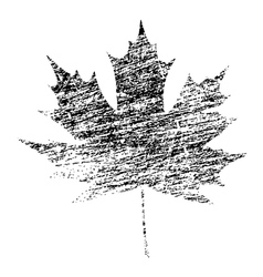 Black grunge maple leaf vector