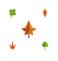 Flat icon leaves set of alder aspen linden and vector