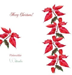 Background with red poinsettia3-06 vector