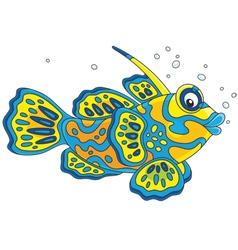 Mandarin fish vector