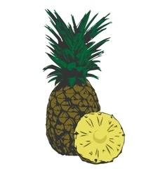 organic pineapple tropical vector image vector image