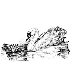 Swan on lake lotus flowers sketch vector image