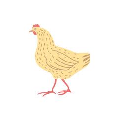 Chicken hand drawn vector