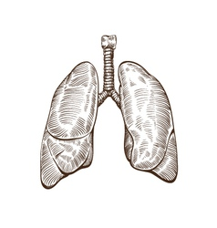 Hand drawn lungs isolated on a white backgrounds vector