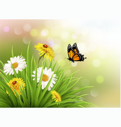 Nature summer daisy flowers with butterfly vector image vector image
