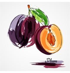 Plum fruits vector