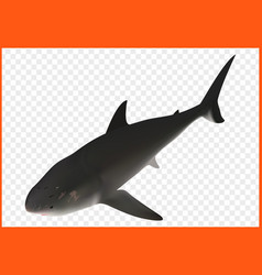 Shark isometric vector