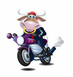 bull on a motorcycle vector image