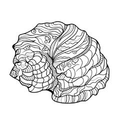 Shell helix coloring book for adults vector