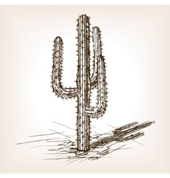 Cactus hand drawn sketch style vector image