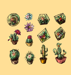 succulents and cactuses vector image