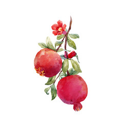 pomegranate fruit branch vector image vector image