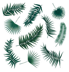Tropical palm leaves jungle leaves set vector