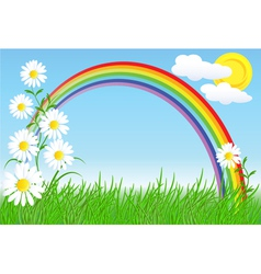 camomiles rainbow and sky vector image