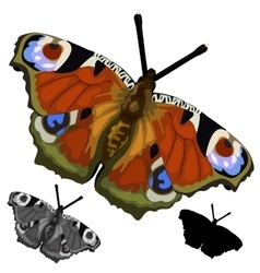 Beautiful colored butterfly isolated vector