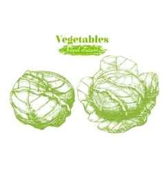 Cabbage Hand Draw Sketch vector image