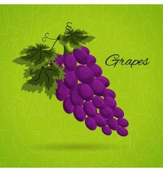 grapes an in a retro style vector image vector image