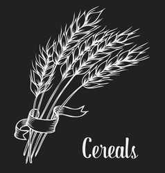 Wheat for cereal vector