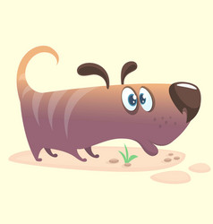 cartoon of dachshund vector image vector image