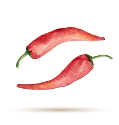 Watercolor handmade pepper vector image