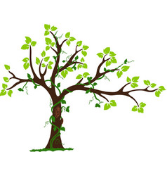 Tree with liana and vine vector