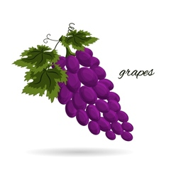 grapes isolated on a white background vector image