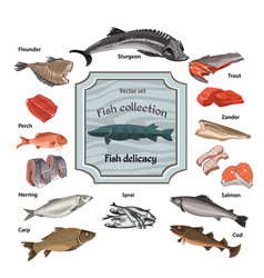 Hand drawn colored seafood collection vector