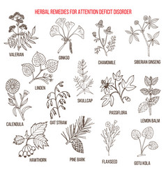 Collection of herbs for attention deficit disorder vector