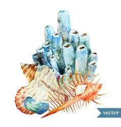 Watercolor  sea coral shell2 vector