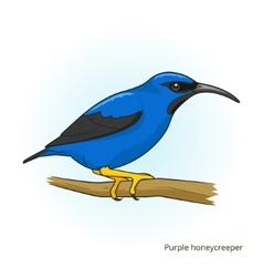Purple honeycreeper bird educational game vector