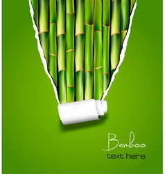 bamboo background with ripped paper vector image