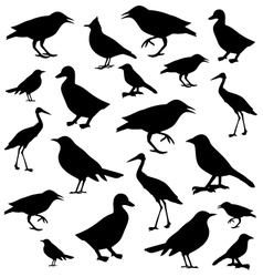 birds icons over white background vector image