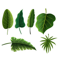 Different types of tropical leaves vector