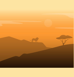 lion in africa vector image
