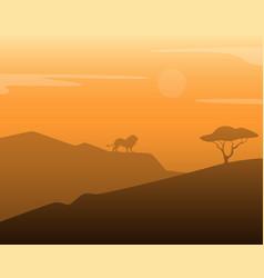 Lion in africa vector