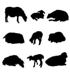 Sheep and lamb vector