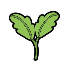 Fresh lettuce vegetable vector
