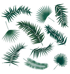 tropical palm leaves jungle leaves set vector image vector image