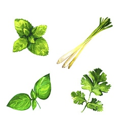 Set of realistic watercolor herbs on white vector