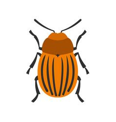 Colorado beetle icon flat style vector