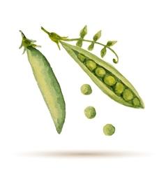 Watercolor handmade peas vector