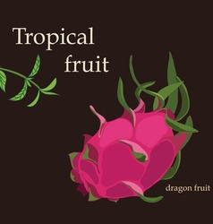 Tropical dragon fruit vector image