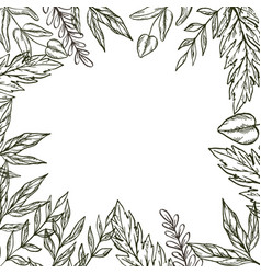 Hand drawn frame of leaves and plants vector