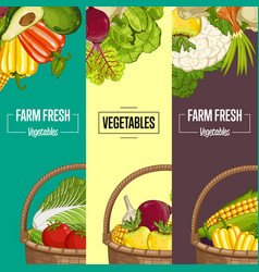 Organic vegetable farming flyers set vector