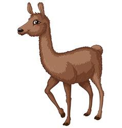 Lama vector image